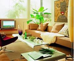客厅绿植搭配添健康