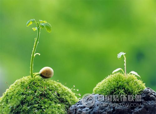 财运滚滚 摆放绿色植物助财运高升