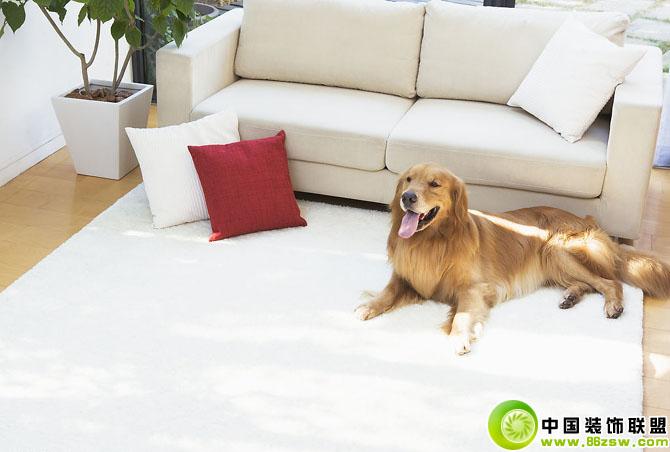 客厅沙发地毯上的宠物狗 现代风格装修效果图 八六装饰网
